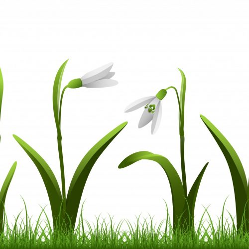 Snowdrop - A symbol of hope, purity and rebirth